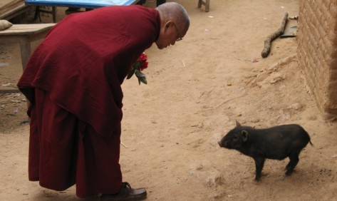 Animal Liberation lama Zopa peq